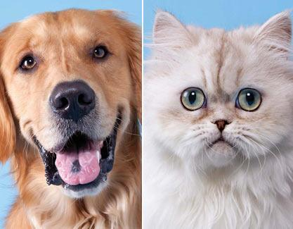 main-dogs-vs-cats_1_