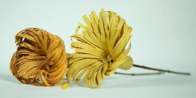 woodshaving flowers