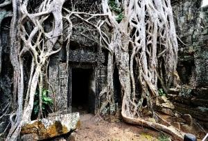 treerootdoor